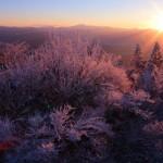 山頂付近の樹氷です。