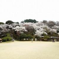 長野公園(奥河内さくら公園)