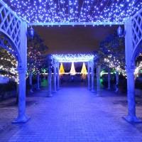 寺ケ池公園クリスマスイルミネーション2015