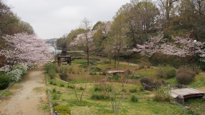 4月8日。狭山池周辺と寺ヶ池公園の桜をメインに撮影して来ました。