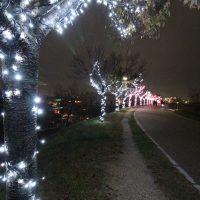 大阪狭山池の「桜まつり~冬~イルミネーション~」へ小雨の中の撮影画像です。