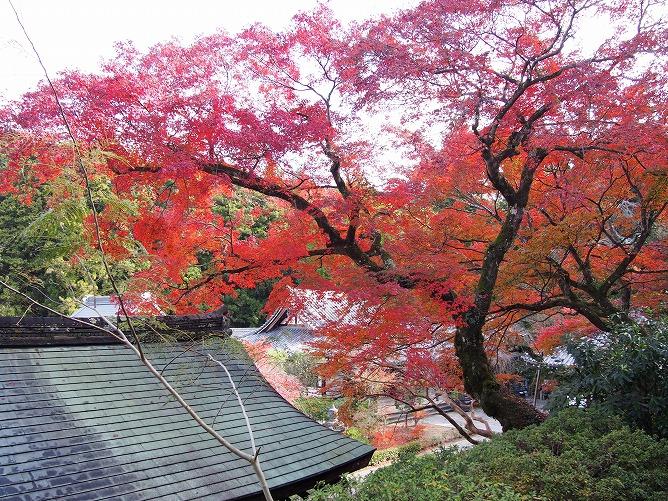 延命寺の紅葉がちょうど見頃となっています。