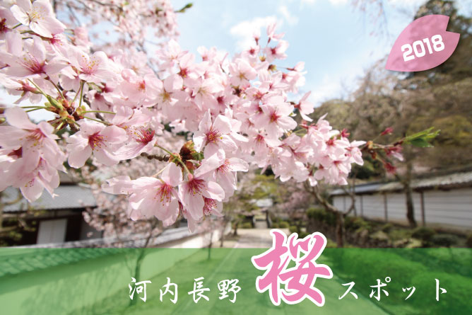 河内長野桜スポット2018