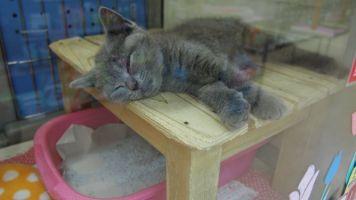 可愛いワンちゃんネコちゃんに会える!ペットン河内長野店