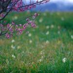 梅と水仙のコラボ。